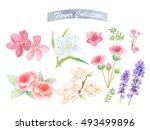 flower watercolor elements ...