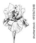Iris Flower In Blossom....
