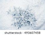 tree branch nature winter... | Shutterstock . vector #493607458