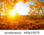 autumn trees on sun in park | Shutterstock . vector #493615075