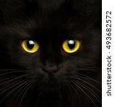 Cute Muzzle Of A Black Cat...