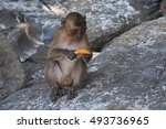 Monkey On The Beach Eat Papaya