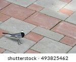 Wagtail On The Sidewalk