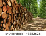 a big pile of wood in a forest... | Shutterstock . vector #49382626