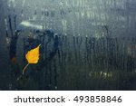 Autumn Birch Tree Leaf On Wet...