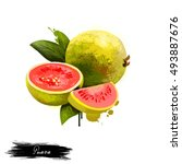 guava fruit isolated on white... | Shutterstock . vector #493887676