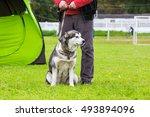 Big Dog On The Grass Field