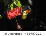 Butterfly On The Hibiscus Flower