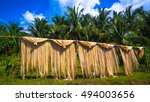 Small photo of Abaca fiber, known as Manila Hemp, drying in an island village.