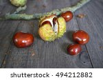 Conker Shell Splitting Open To...