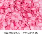 Stock photo the fresh pink rose petal background with water rain drop 494284555