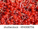 Red Viburnum  Viburnum Berry ...