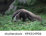 view of giant anteater | Shutterstock . vector #494314906