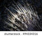 porcupine detail. | Shutterstock . vector #494334316