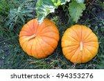Orange Pumpkins On A Grass In ...