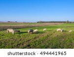 Small photo of Pigs and piglets grazing in a field pasturage under blue sky. Natural organic agriculture. Farming.
