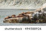 rookery steller sea lions.... | Shutterstock . vector #494588926