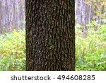 tree dark trunk on green... | Shutterstock . vector #494608285