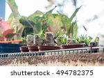 evergreen   Shutterstock . vector #494782375