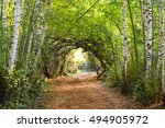 Natural Forest Archway With...