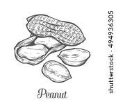 peanut nut seed vector.... | Shutterstock .eps vector #494936305