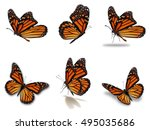 Stock photo beautiful six monarch butterflies set isolated on white background 495035686