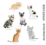 different breeds of cats ...   Shutterstock .eps vector #495091408