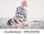 Siberian Husky Dog In...