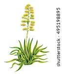 realistic illustration of agave ... | Shutterstock . vector #495198895