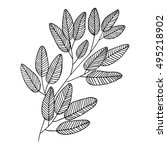 vector bay leaves of monochrome