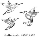 sketch  doodle  hand drawn... | Shutterstock .eps vector #495219532
