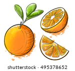 hand drawn watercolor painting... | Shutterstock .eps vector #495378652