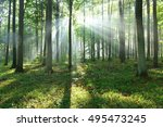 beautiful morning in the forest | Shutterstock . vector #495473245