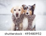 Two Dogs Sitting In Snow Next...