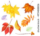 Set Of Autumn Leaves Isolated...