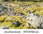 Marmot  Marmota Marmota...