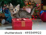close up of cute brown tabby... | Shutterstock . vector #495549922