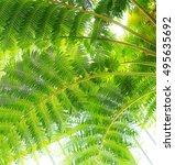 palm in square format picture | Shutterstock . vector #495635692