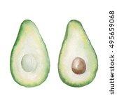 watercolor hand drawn avocado... | Shutterstock . vector #495659068