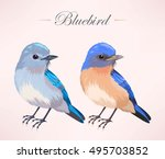 Illustration Of Cute Bluebird