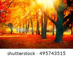 Autumn. Fall Scene. Beautiful...