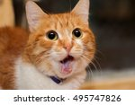 Stock photo red cat dropping his jaw surprisingly 495747826