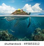Beautiful View Island Turtle...