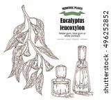 hand drawn eucalyptus leaves... | Shutterstock .eps vector #496252852