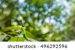 blue turquoise dragonfly on a...   Shutterstock . vector #496292596