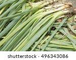 Small photo of Leaf onion - Allium fistulosum