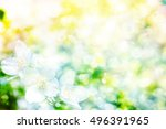 white jasmine the branch... | Shutterstock . vector #496391965