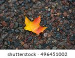 A Fallen Leaf Laying On A Wet...