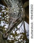 Small photo of Closeup image of Malayan gharial in the pond