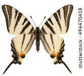 Dorsal View Of Scarce...